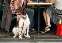 8 Dog Friendly Restaurants in Cairo