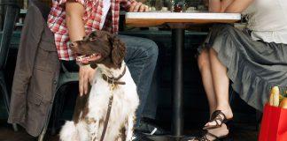 8 Dog Friendly Restaurants in Cairo